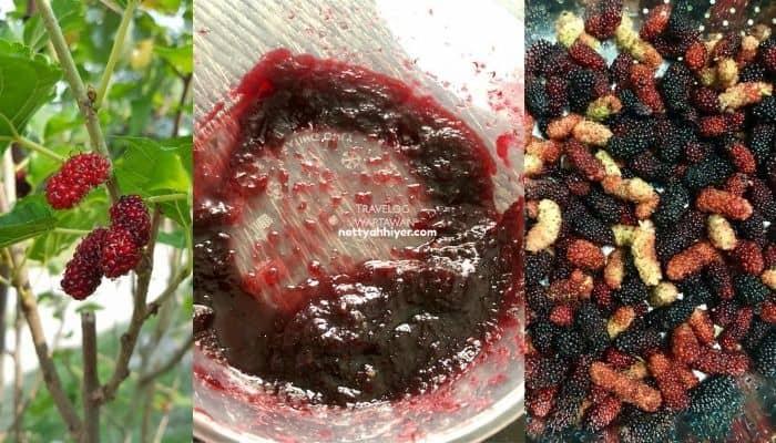 cara-buat-jem-mulberi-paling-senang